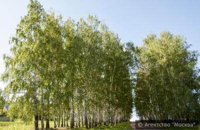 Жители столицы смогут пожаловаться на некачественное содержание зеленых насаждений через портал «Наш город»