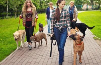 Депутаты Мосгордумы выступили с инициативой повысить штраф за выгул собак без намордников