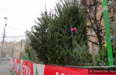 В преддверии Нового года в районе Орехово-Борисово Северное откроется четыре елочных базара
