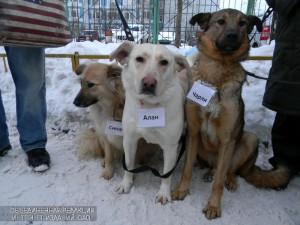 Вакцинация домашних животных в районе пройдет в конце марта