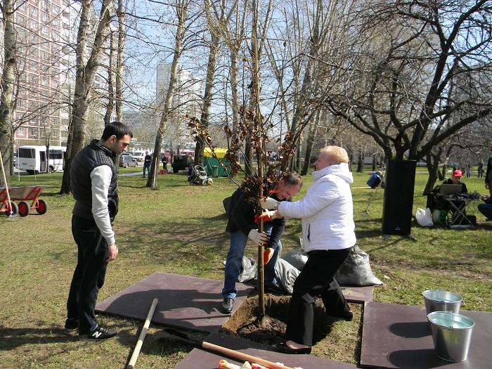 Озеленение в районе Орехово-Борисово Северное