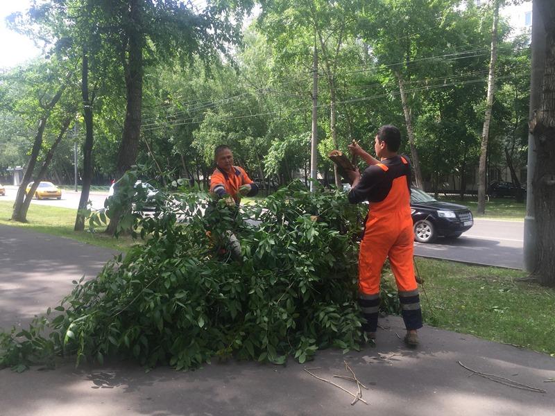 Обрезка деревьев в районе Орехово-Борисово Северное