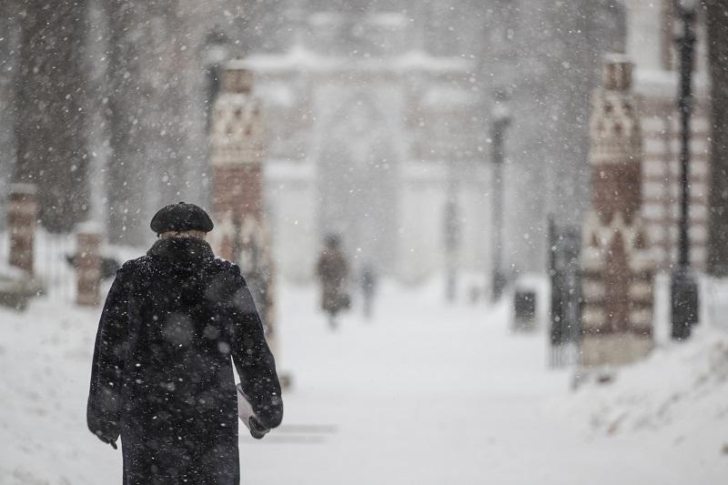 царицыно, зима