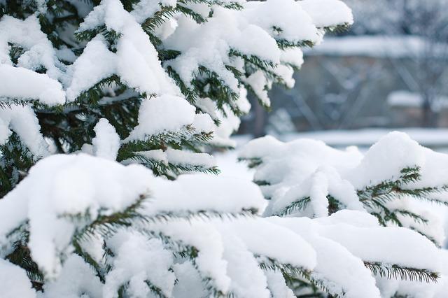 снег, елка, пиксабай
