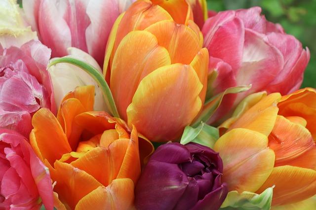 цветы, 8 марта, пиксабай
