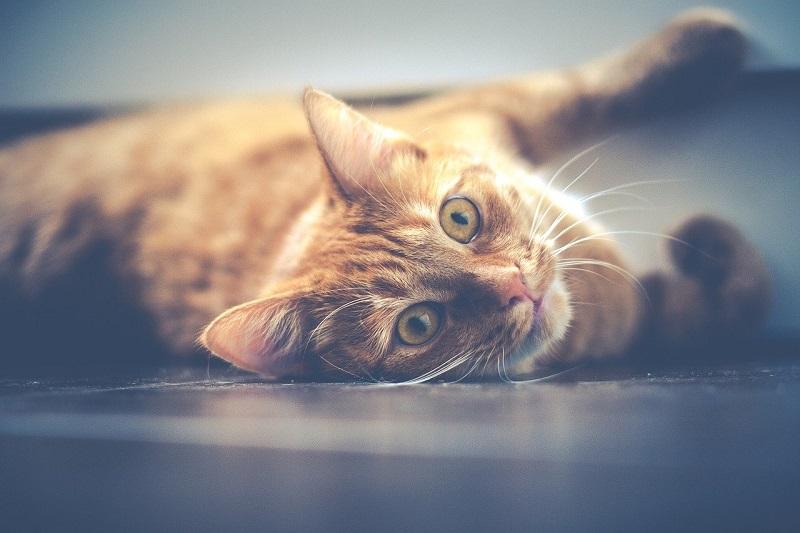 Кошка, животное,